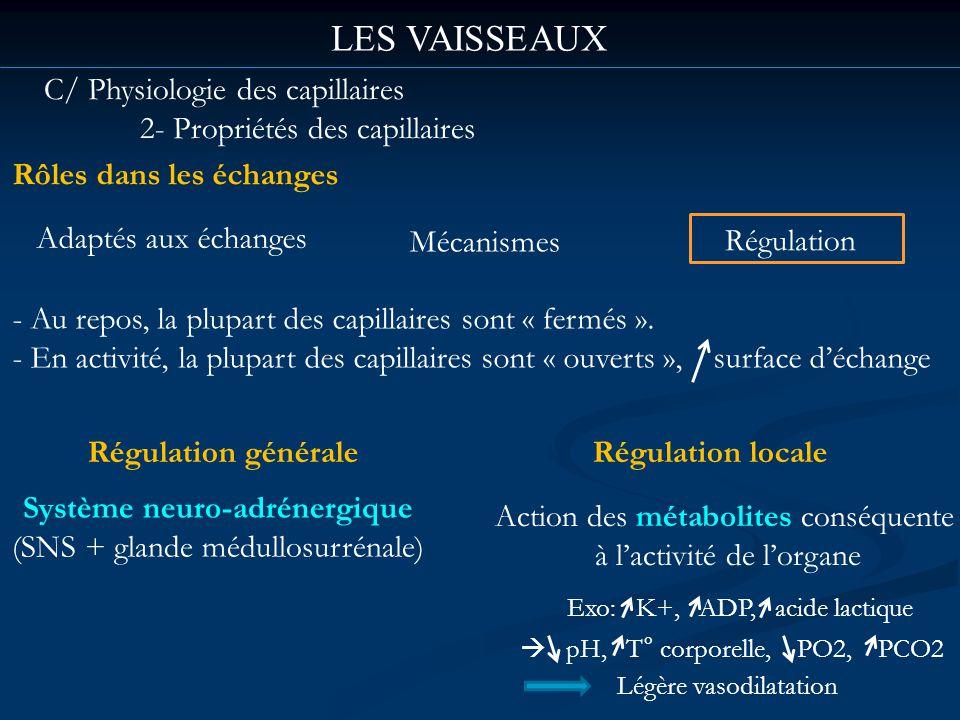 LES VAISSEAUX C/ Physiologie des capillaires 2- Propriétés des capillaires Rôles dans les échanges Adaptés aux échanges Mécanismes Régulation - Au rep