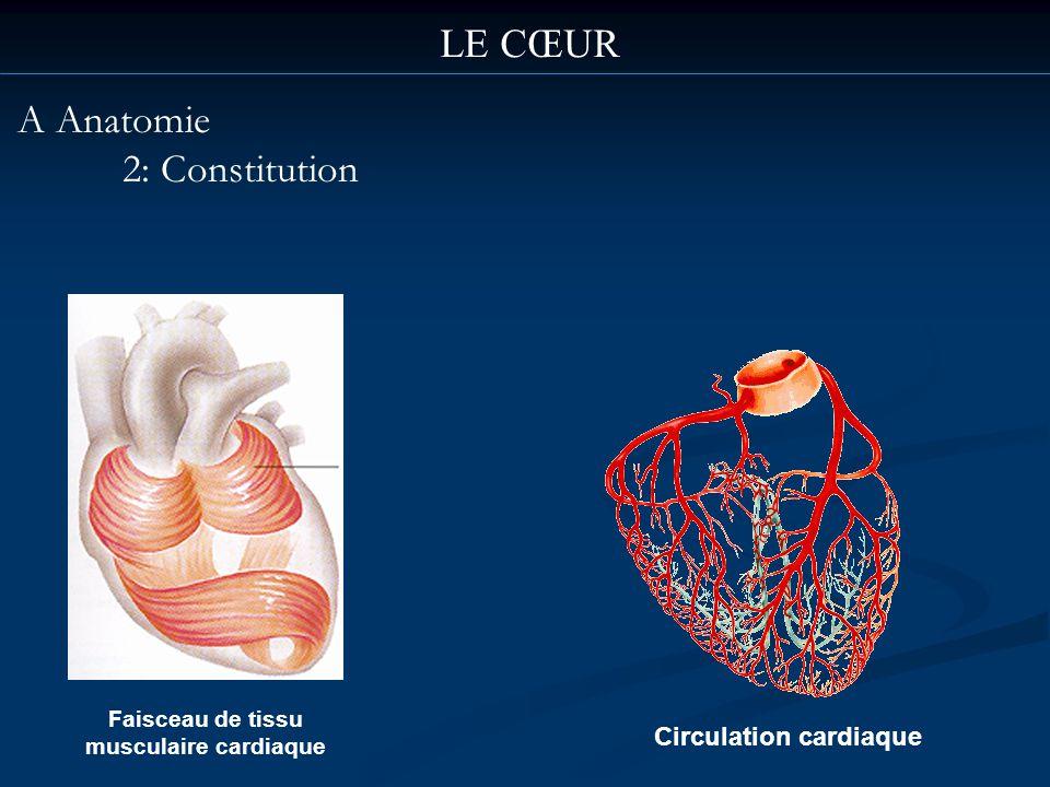 LE CŒUR A Anatomie 2: Constitution Faisceau de tissu musculaire cardiaque Circulation cardiaque