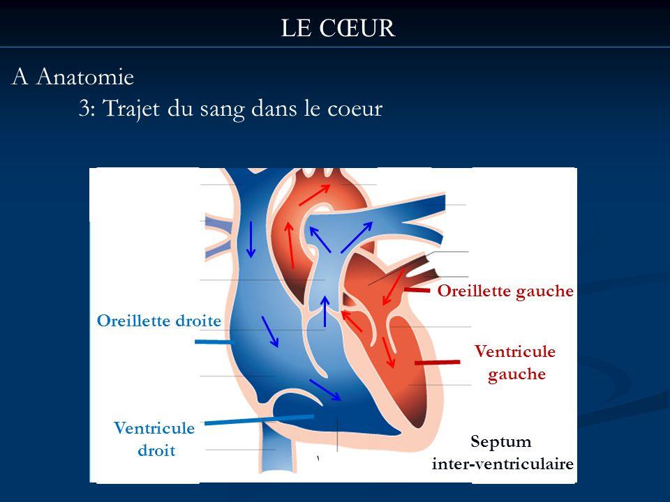 LE CŒUR A Anatomie 3: Trajet du sang dans le coeur Oreillette gauche Ventricule gauche Oreillette droite Ventricule droit Septum inter-ventriculaire