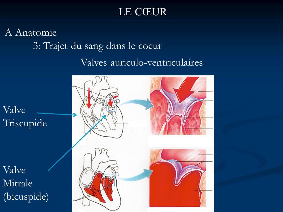 LE CŒUR A Anatomie 3: Trajet du sang dans le coeur Valves auriculo-ventriculaires Valve Triscupide Valve Mitrale (bicuspide)