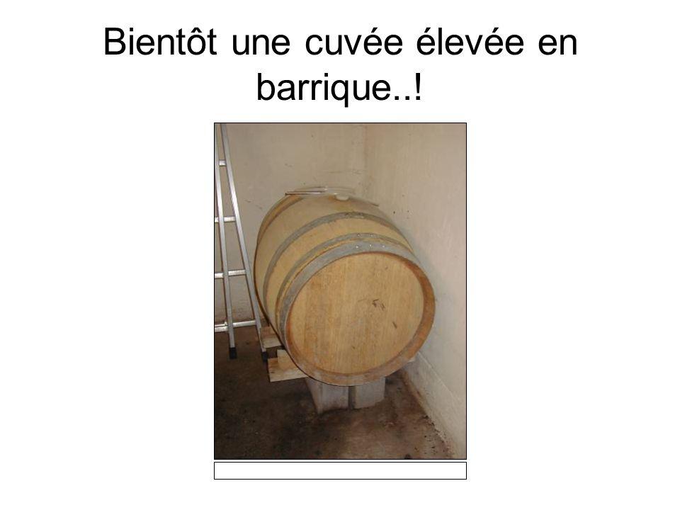 Le pressoir pour le raisin est beaucoup plus moderne: