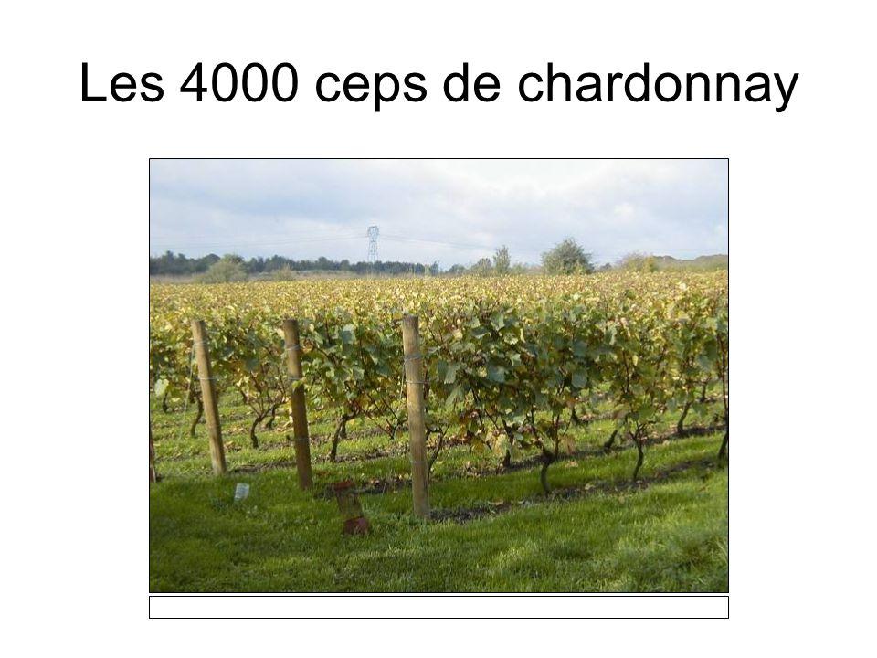 Le vignoble en automne… Le dimanche 29 octobre 2006