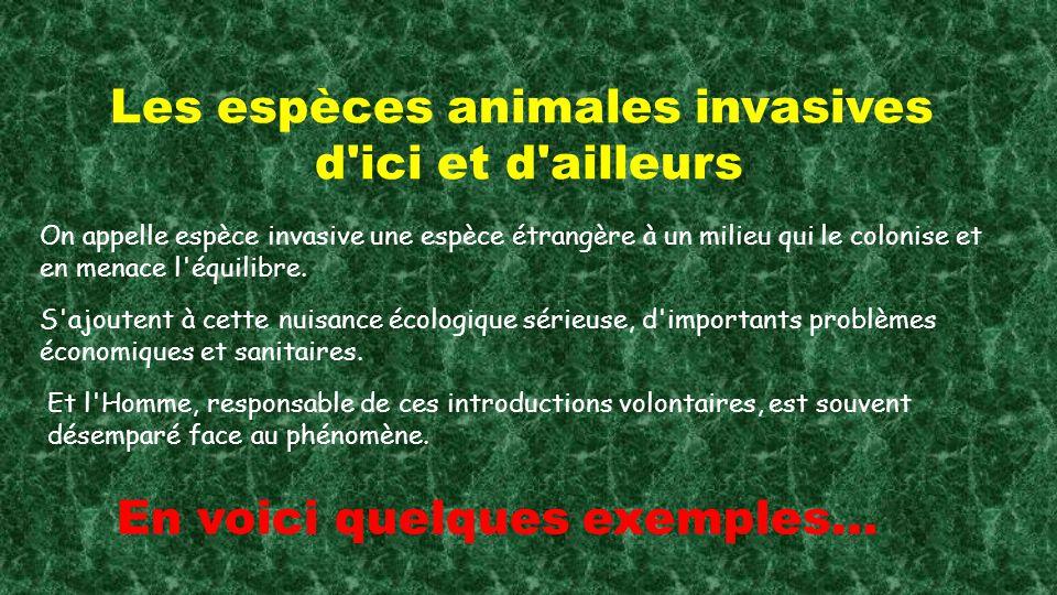 Les espèces animales invasives d ici et d ailleurs On appelle espèce invasive une espèce étrangère à un milieu qui le colonise et en menace l équilibre.