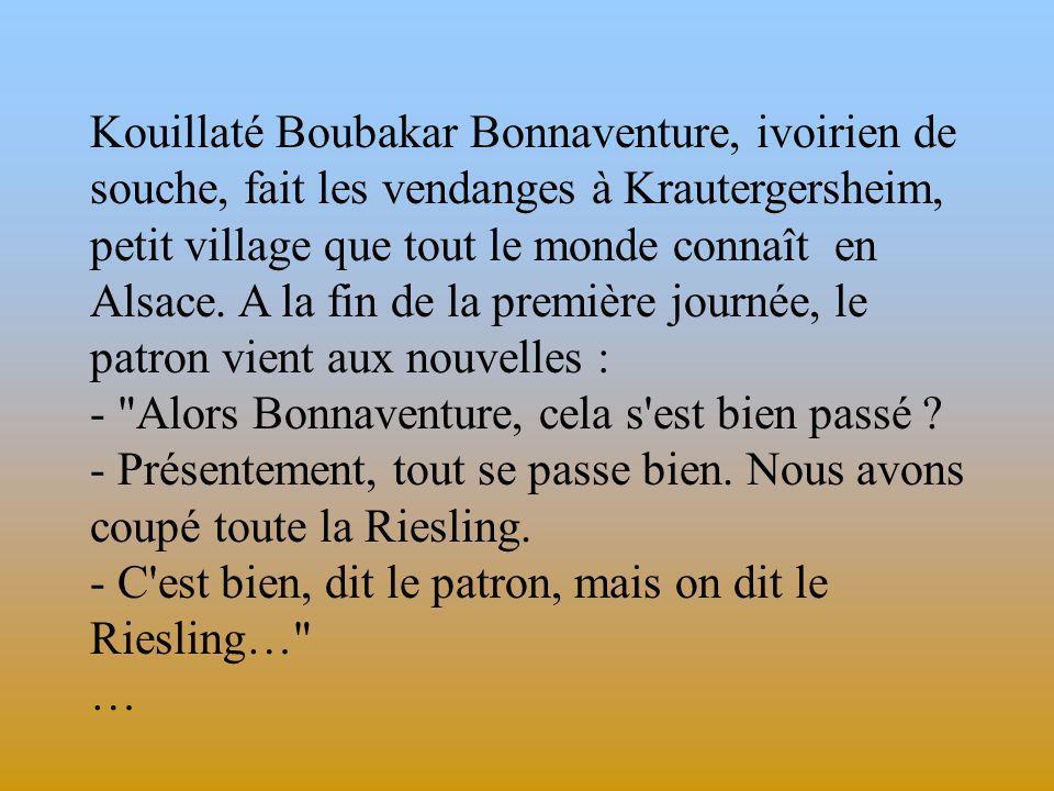 Kouillaté Boubakar Bonnaventure, ivoirien de souche, fait les vendanges à Krautergersheim, petit village que tout le monde connaît en Alsace.
