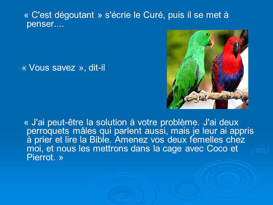 Diaporama PPS réalisé pour http://www.diaporamas-a-la-con.com « C est dégoutant » s écrie le Curé, puis il se met à penser....