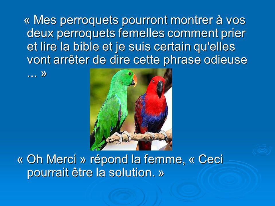 Diaporama PPS réalisé pour http://www.diaporamas-a-la-con.com « Mes perroquets pourront montrer à vos deux perroquets femelles comment prier et lire l
