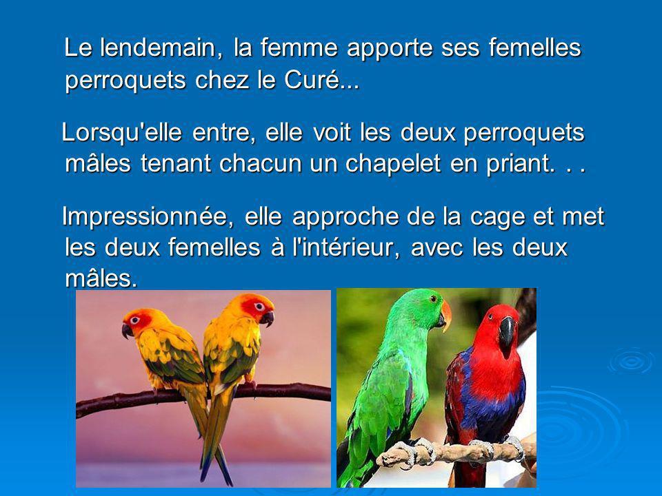 Diaporama PPS réalisé pour http://www.diaporamas-a-la-con.com Le lendemain, la femme apporte ses femelles perroquets chez le Curé...