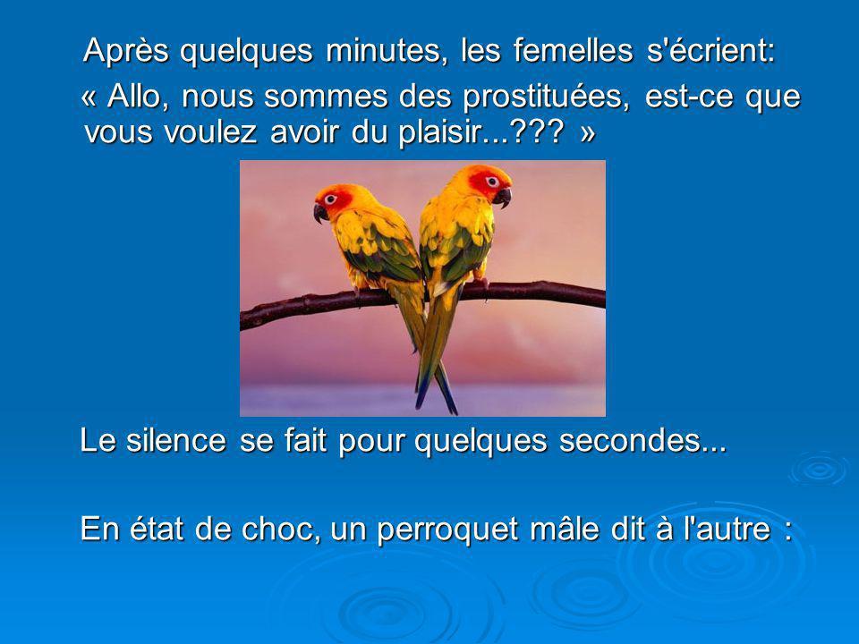 Diaporama PPS réalisé pour http://www.diaporamas-a-la-con.com Après quelques minutes, les femelles s écrient: Après quelques minutes, les femelles s écrient: « Allo, nous sommes des prostituées, est-ce que vous voulez avoir du plaisir...??.