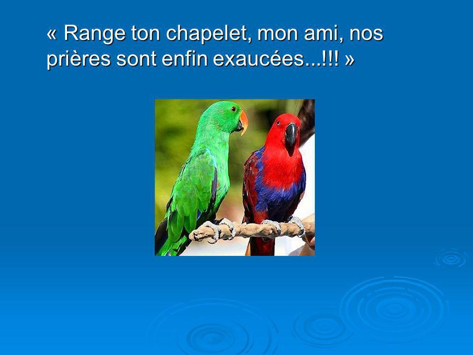 Diaporama PPS réalisé pour http://www.diaporamas-a-la-con.com « Range ton chapelet, mon ami, nos prières sont enfin exaucées...!!.