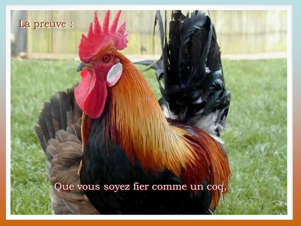 La langue française... c'est tellement beau. La langue française... c'est tellement beau. Les termes empruntés au monde animal sont partout.
