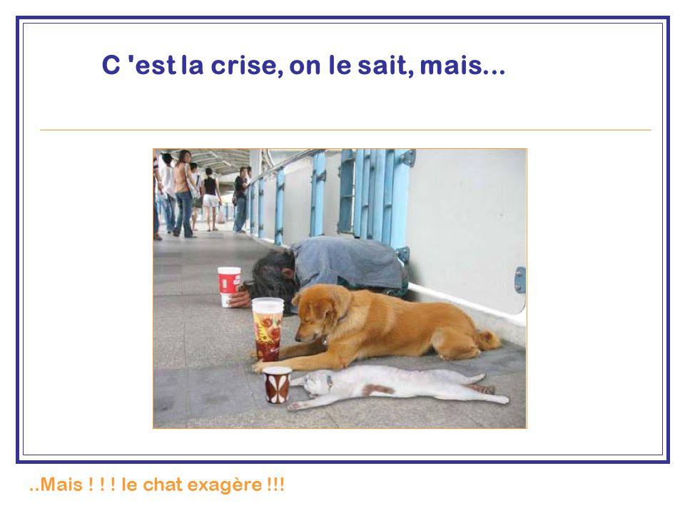 C 'est la crise, on le sait, mais.....Mais ! ! ! le chat exagère !!!