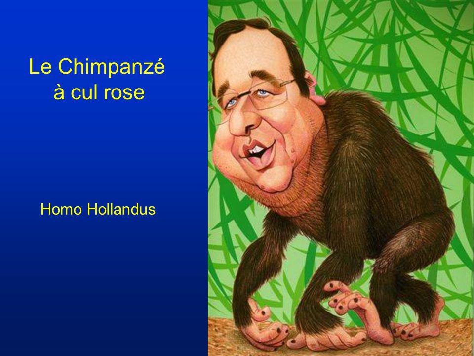 Lhomo sapionce Chiracus sonotonus