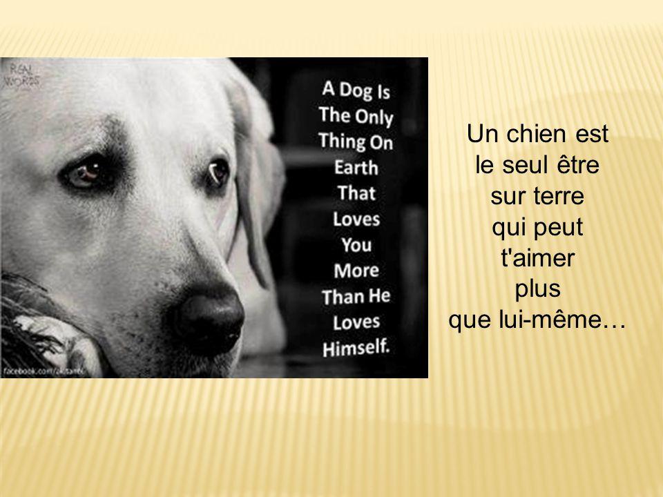 Un chien est le seul être sur terre qui peut t'aimer plus que lui-même…