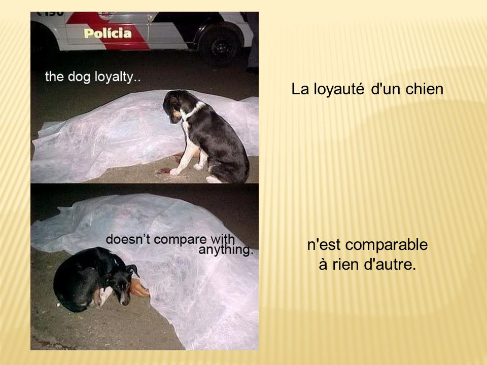 La loyauté d'un chien n'est comparable à rien d'autre.