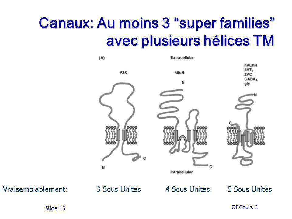 Of Cours 3 Slide 13 Canaux: Au moins 3 super families avec plusieurs hélices TM Vraisemblablement: 3 Sous Unités 4 Sous Unités 5 Sous Unités