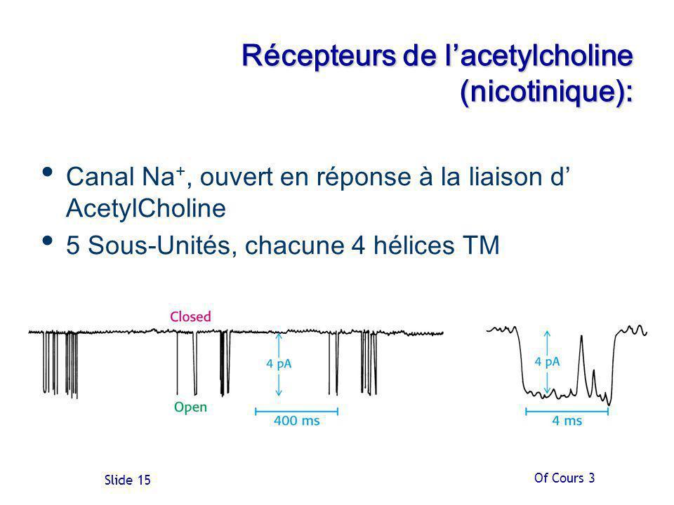 Of Cours 3 Slide 15 Récepteurs de lacetylcholine (nicotinique): Canal Na +, ouvert en réponse à la liaison d AcetylCholine 5 Sous-Unités, chacune 4 hélices TM