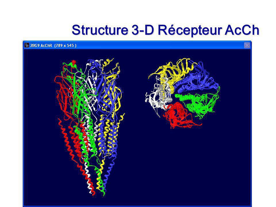 Of Cours 3 Slide 23 Structure 3-D Récepteur AcCh