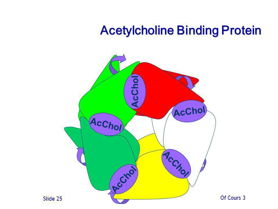 Of Cours 3 Slide 25 Acetylcholine Binding Protein AcChol