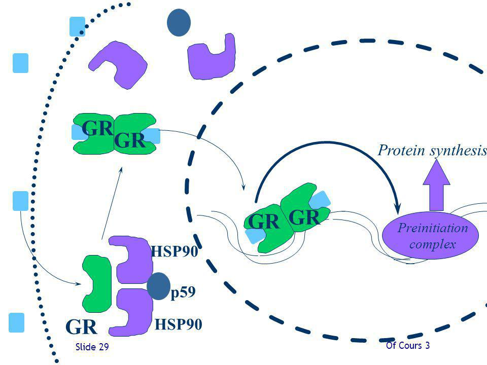 Of Cours 3 Slide 29 GR HSP90 p59 Protein synthesis Preinitiation complex GR