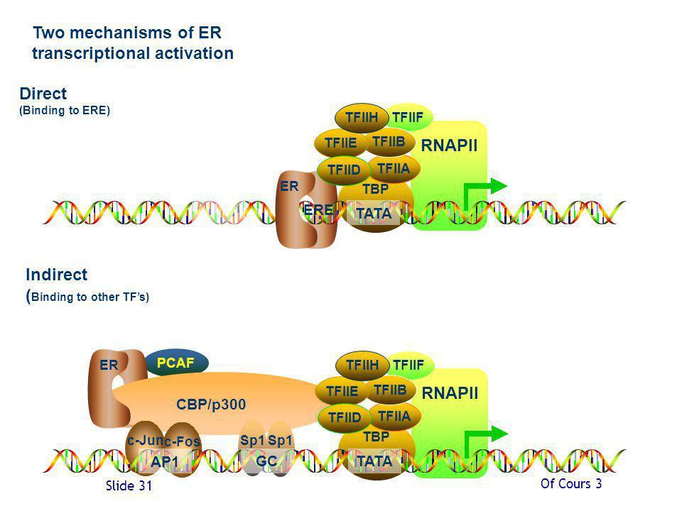 Of Cours 3 Slide 31 PCAF CBP/p300 Sp1 c-Jun c-Fos RNAPII TBP TFIIF TFIIA TFIIB TFIIE TFIID TFIIH RNAPII TBP Two mechanisms of ER transcriptional activation Direct (Binding to ERE) Indirect ( Binding to other TFs) ERE AP1 GC TATA TFIIF TFIIA TFIIB TFIIE TFIID TFIIH TATA ER