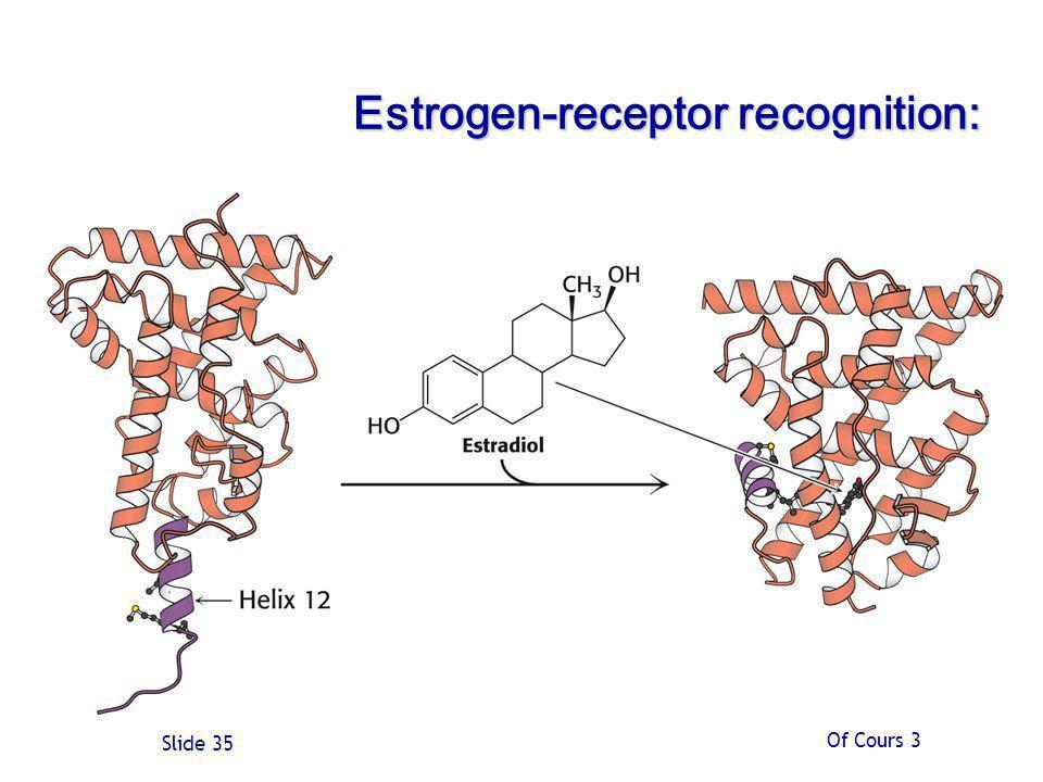 Of Cours 3 Slide 35 Estrogen-receptor recognition: