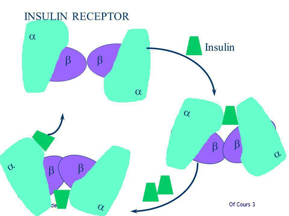 Of Cours 3 Slide 45 Insulin INSULIN RECEPTOR