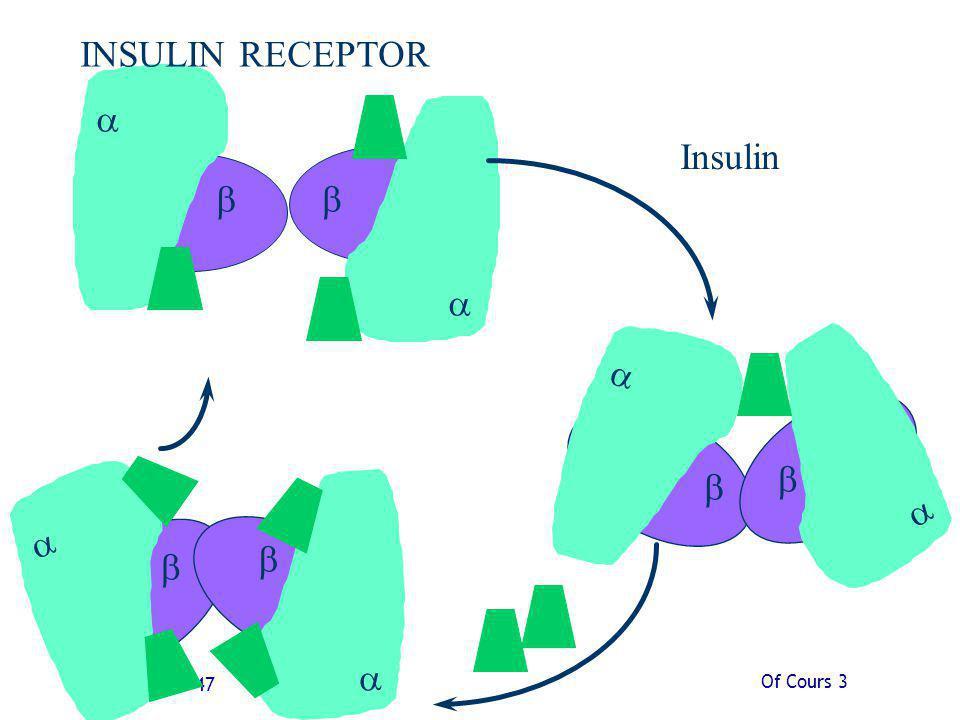 Of Cours 3 Slide 47 Insulin INSULIN RECEPTOR