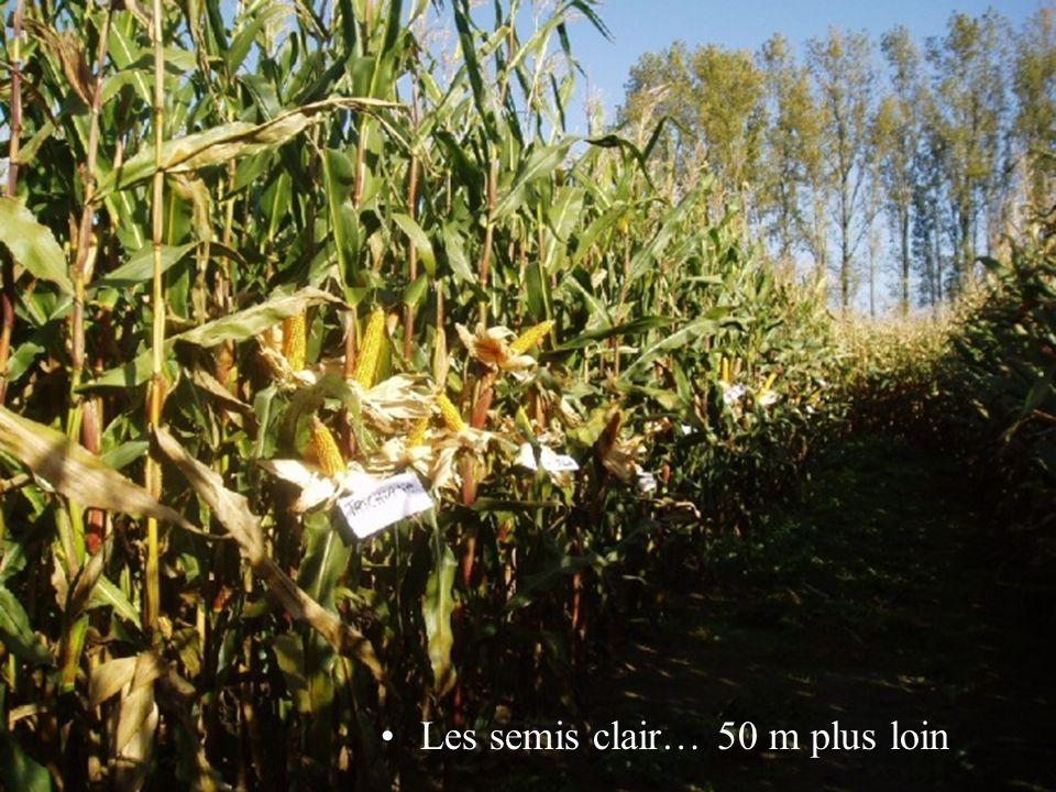 Les semis clair… 50 m plus loin