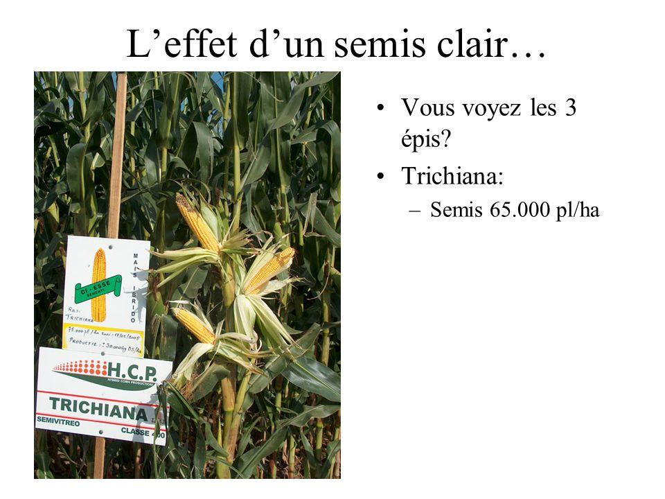 Leffet dun semis clair… Vous voyez les 3 épis Trichiana: –Semis 65.000 pl/ha