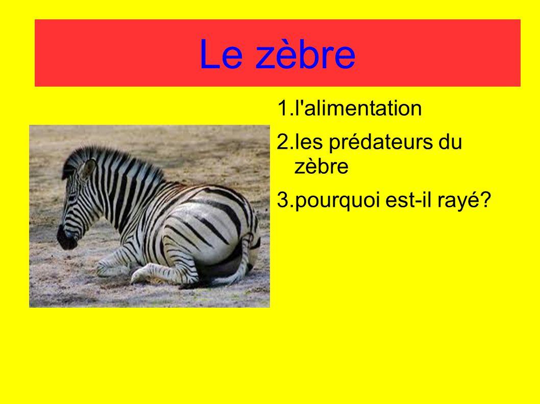 Le zèbre 1.l'alimentation 2.les prédateurs du zèbre 3.pourquoi est-il rayé?