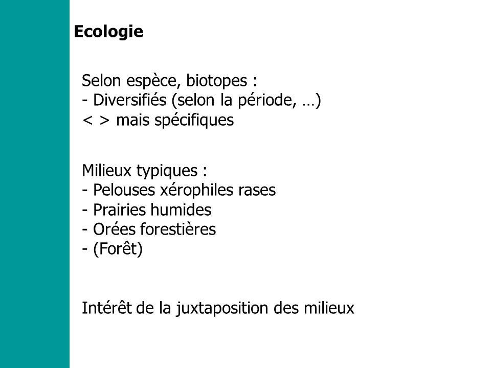 Ecologie Selon espèce, biotopes : - Diversifiés (selon la période, …) mais spécifiques Milieux typiques : - Pelouses xérophiles rases - Prairies humides - Orées forestières - (Forêt) Intérêt de la juxtaposition des milieux