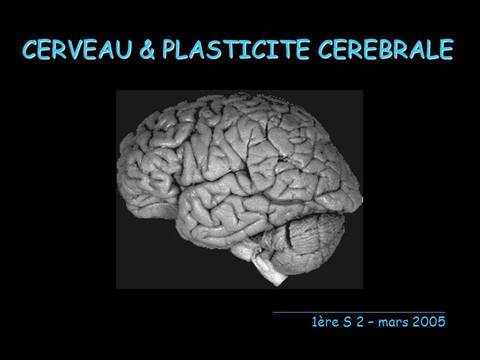 CERVEAU & PLASTICITE CEREBRALE 1ère S 2 – mars 2005
