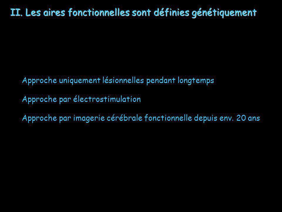 II. Les aires fonctionnelles sont définies génétiquement Approche uniquement lésionnelles pendant longtemps Approche par électrostimulation Approche p