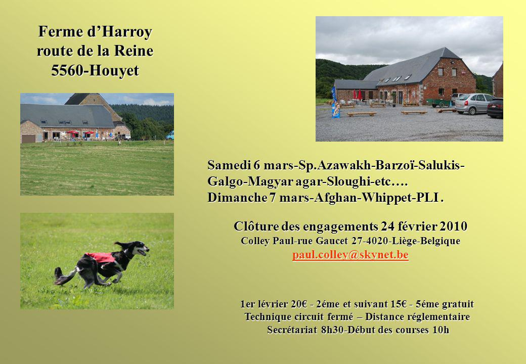 Ferme dHarroy route de la Reine 5560-Houyet Samedi 6 mars-Sp.Azawakh-Barzoï-Salukis- Galgo-Magyar agar-Sloughi-etc….