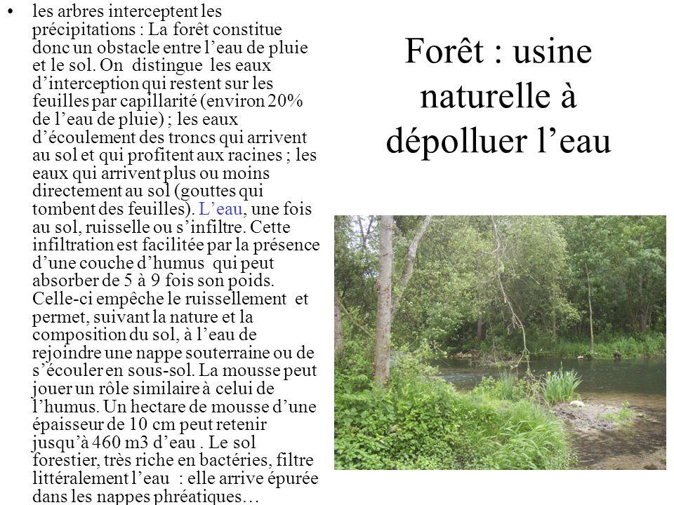 Forêt : usine naturelle à dépolluer leau les arbres interceptent les précipitations : La forêt constitue donc un obstacle entre leau de pluie et le sol.