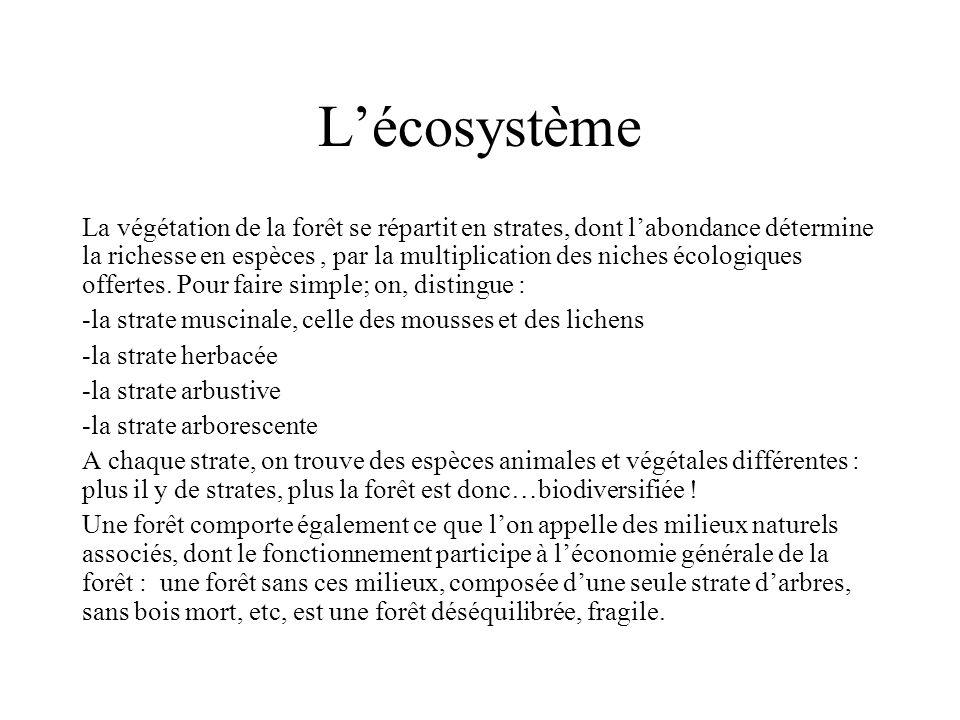 Lécosystème La végétation de la forêt se répartit en strates, dont labondance détermine la richesse en espèces, par la multiplication des niches écolo