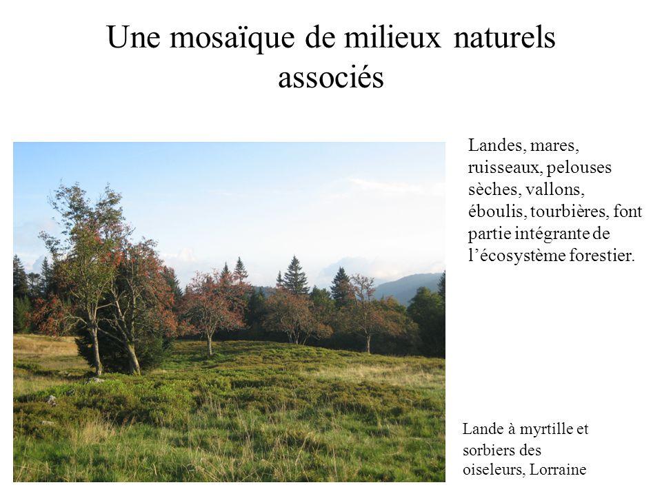 Une mosaïque de milieux naturels associés Lande à myrtille et sorbiers des oiseleurs, Lorraine Landes, mares, ruisseaux, pelouses sèches, vallons, ébo