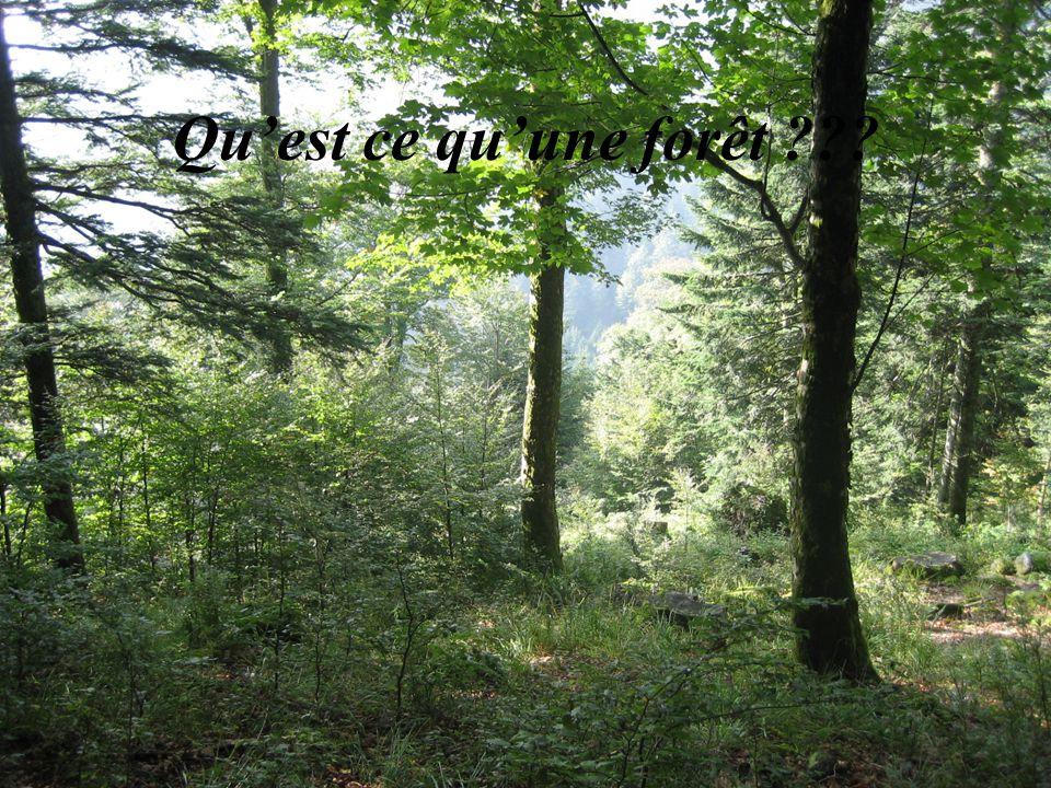 Quest ce quune forêt ???