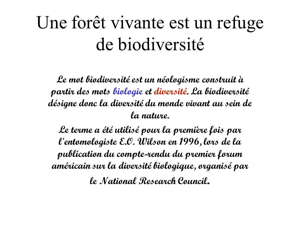 Une forêt vivante est un refuge de biodiversité Le mot biodiversité est un néologisme construit à partir des mots biologie et diversité. La biodiversi