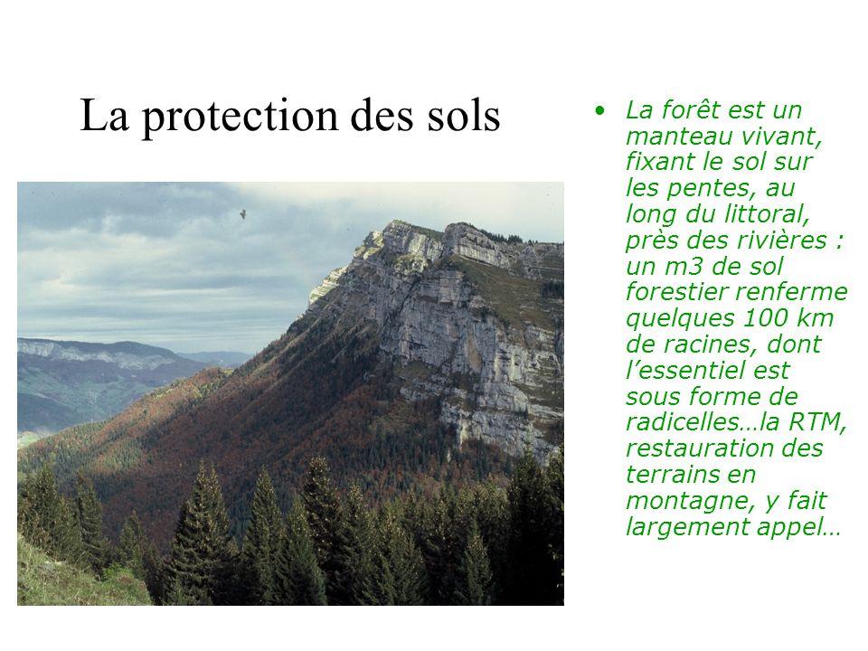 La protection des sols La forêt est un manteau vivant, fixant le sol sur les pentes, au long du littoral, près des rivières : un m3 de sol forestier renferme quelques 100 km de racines, dont lessentiel est sous forme de radicelles…la RTM, restauration des terrains en montagne, y fait largement appel…