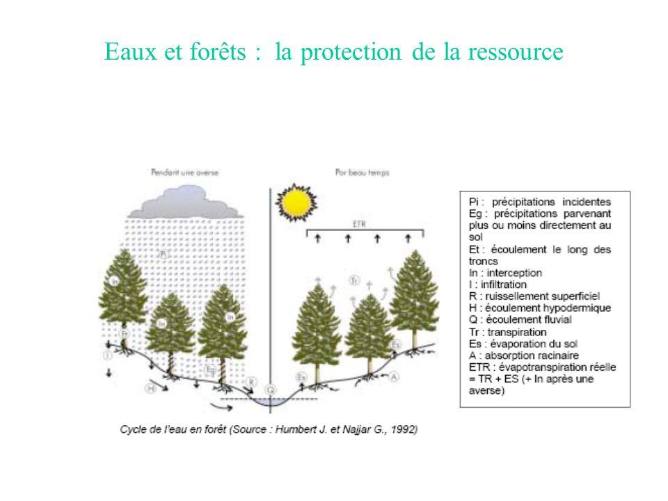 Eaux et forêts : la protection de la ressource