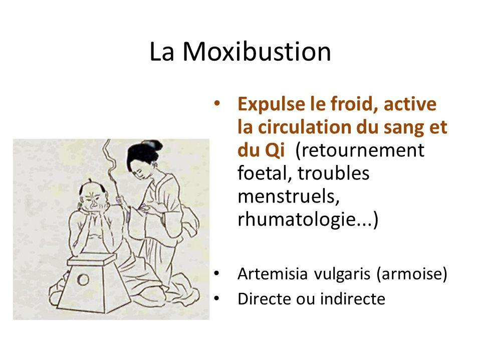 La Moxibustion Expulse le froid, active la circulation du sang et du Qi (retournement foetal, troubles menstruels, rhumatologie...) Artemisia vulgaris
