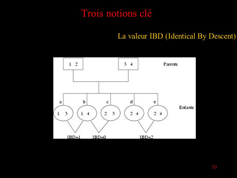 10 Trois notions clé La valeur IBD (Identical By Descent)
