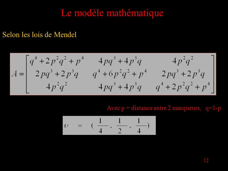 12 Le modèle mathématique Selon les lois de Mendel Avec p = distance entre 2 marqueurs, q=1-p