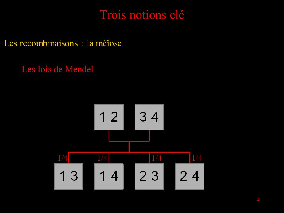4 Trois notions clé Les lois de Mendel 1/4 Les recombinaisons : la méïose