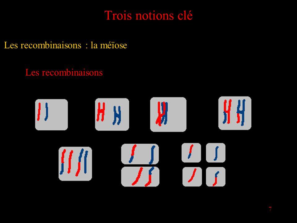 7 Trois notions clé Les recombinaisons Les recombinaisons : la méïose