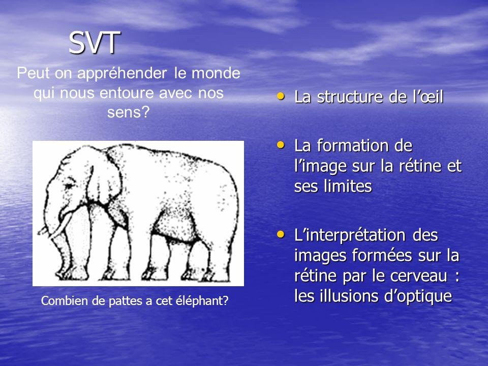 SVT La structure de lœil La structure de lœil La formation de limage sur la rétine et ses limites La formation de limage sur la rétine et ses limites Linterprétation des images formées sur la rétine par le cerveau : les illusions doptique Linterprétation des images formées sur la rétine par le cerveau : les illusions doptique Peut on appréhender le monde qui nous entoure avec nos sens.