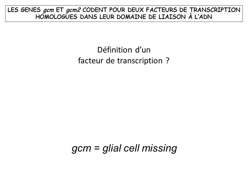 LES GENES gcm ET gcm2 CODENT POUR DEUX FACTEURS DE TRANSCRIPTION HOMOLOGUES DANS LEUR DOMAINE DE LIAISON À LADN Définition dun facteur de transcriptio