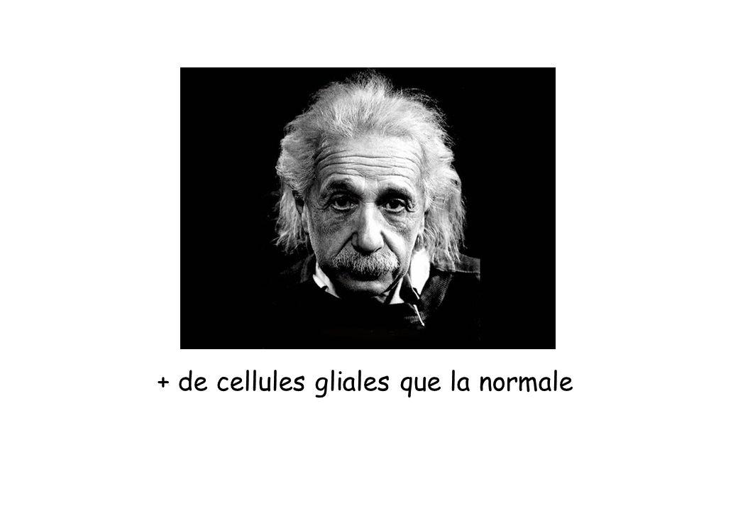 + de cellules gliales que la normale