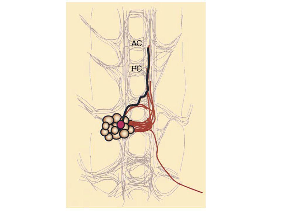 Crible enhancer trap avec P[etau-lacZ] qui permet de bien visualiser les trajets axonaux - crible de 2400 nouvelles insertions au hasard.